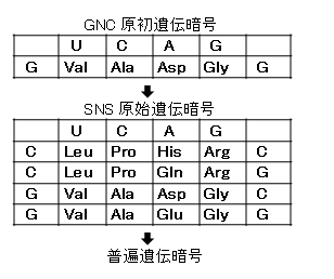GNC-SNS原始遺伝暗号仮説