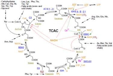 タンパク質代謝系の方が先に出来た?